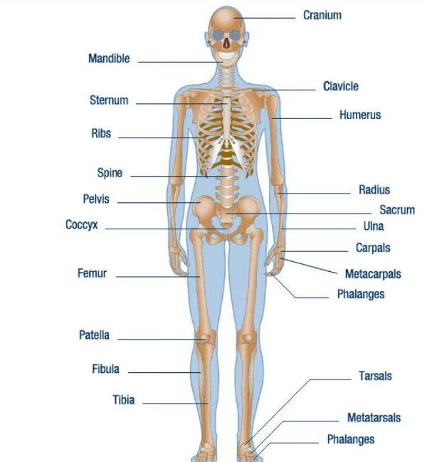 Higgins Claims Services - Skeleton